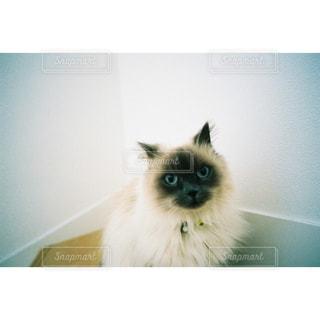 猫,動物,階段,ペット,人物,フィルム,フィルム写真,ネコ
