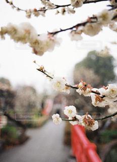 花のクローズアップの写真・画像素材[3018257]