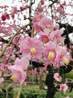 花のクローズアップの写真・画像素材[3018253]