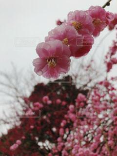 花のクローズアップの写真・画像素材[3018254]