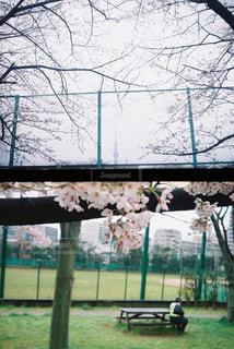 空,公園,花,春,桜,屋外,東京,スカイツリー,草,樹木,フェンス,フィルム,フィルムカメラ,フィルム写真,さくら,働く男,警備員,亀戸,ハーフカメラ,亀戸中央公園