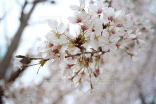 花のクローズアップの写真・画像素材[3056727]