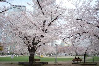 公園の大きな木の写真・画像素材[3056730]