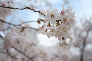 花のクローズアップの写真・画像素材[3056728]