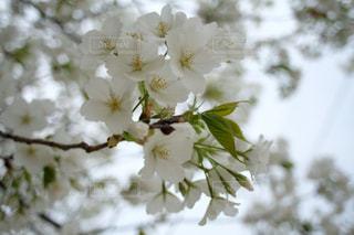花のクローズアップの写真・画像素材[3056729]