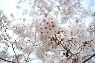 花のクローズアップの写真・画像素材[3056732]