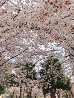 木のクローズアップの写真・画像素材[3056735]