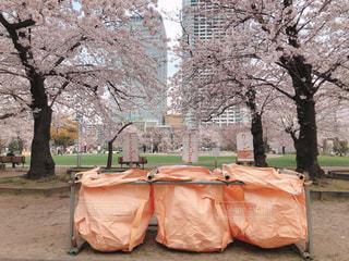 風景,花,桜,屋外,東京,花見,樹木,お花見,ビン,ゴミ箱,地面,錦糸町,さくら,マナー,カン,整理整頓,錦糸公園,燃えるゴミ,燃えないゴミ,ゴミ出し