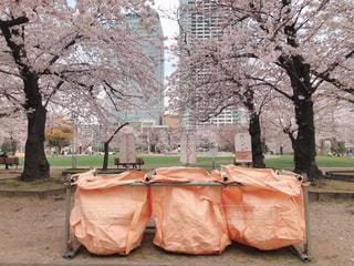 桜,屋外,東京,花見,オレンジ,樹木,お花見,ビン,ゴミ箱,地面,錦糸町,さくら,カン,錦糸公園,燃えるゴミ,燃えないゴミ,ゴミ出し