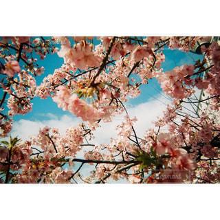 木のクローズアップの写真・画像素材[3056741]