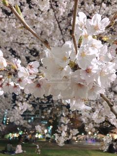 花のクローズアップの写真・画像素材[3056740]