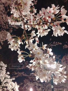 花のクローズアップの写真・画像素材[3056746]