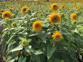 花のクローズアップの写真・画像素材[3493659]