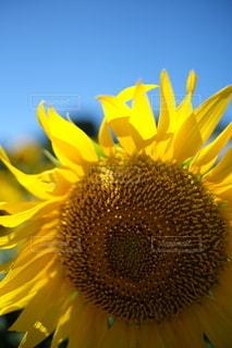 花のクローズアップの写真・画像素材[3558903]