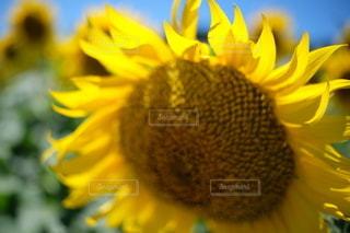 花のクローズアップの写真・画像素材[3558905]