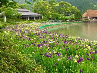 雨,屋外,緑,お花,菖蒲