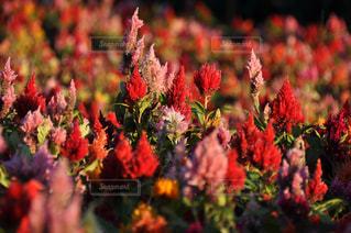 近くの花のアップの写真・画像素材[1124357]