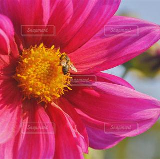 赤と黄色の花の写真・画像素材[1124359]