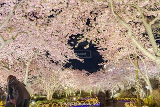 花,桜,ハート,草木