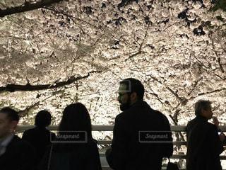 夜桜,ライトアップ,東京都,アークヒルズ