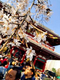 風景,空,春,桜,浅草,樹木