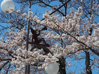 近くの木のアップの写真・画像素材[1127988]