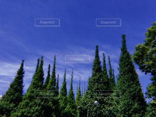 新緑のあおの写真・画像素材[1184579]