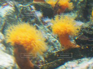 海,黄色,水族館,イエロー,黄,イソギンチャク,yellow
