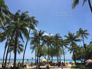 海,海外,ビーチ,旅行,ハワイ,Hawaii,ワイキキ,海外旅行