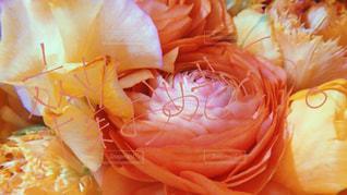 文字,ピンク,花束,お花,オレンジ,お祝い,卒業,手書き,おめでとう,日本語,手書き文字