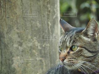 猫,動物,屋外,ペット,人物,外,癒し,可愛い,石,ネコ