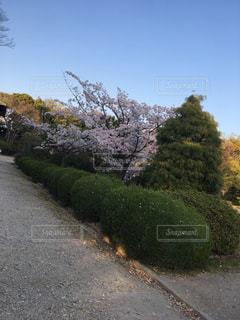 愛知県  亀城公園