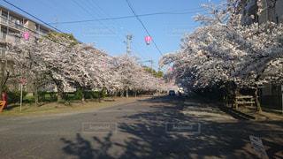 桜,春日井市,王子製紙