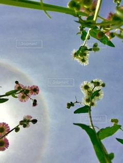 木の枝に花の花瓶の写真・画像素材[1159418]