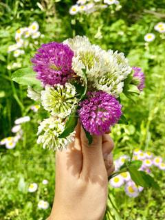 自然の花束の写真・画像素材[1159440]