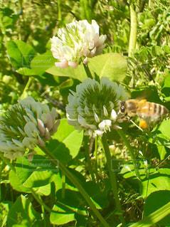 お花と蜂さんの写真・画像素材[1170624]