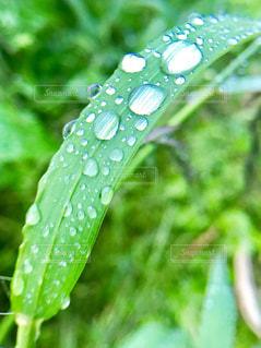 近くに緑の葉のアップの写真・画像素材[1180453]