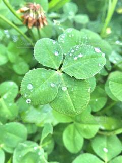 近くに緑の葉のアップの写真・画像素材[1180459]