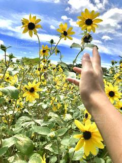 黄色い花を持っている手の写真・画像素材[1396624]