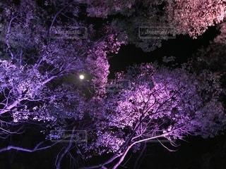 空,花,春,桜,夜,ピンク,白,夜桜,月
