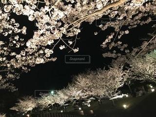 空,花,春,桜,夜,夜桜