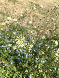 自然,風景,花,春,屋外,緑,青空,光,草木