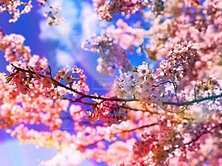 自然,公園,春,桜,木,屋外,樹木