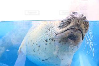 動物の写真・画像素材[1349589]