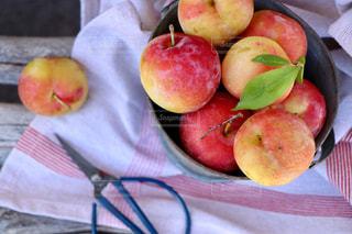 フルーツ,スモモ,採れたて,フレッシュ,すもも,摘みたて,もぎたて