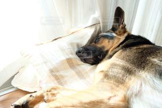 お昼寝の写真・画像素材[1218320]