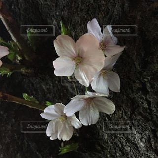白い花瓶の花でいっぱいの写真・画像素材[1132108]