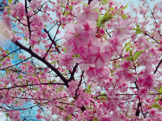 空,花,春,フラワー,和