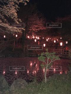 花,春,桜,夜,屋外,神社,綺麗,暗い,池,夜桜,景色,樹木,草木