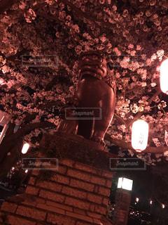 花,春,桜,夜,屋外,神社,綺麗,暗い,夜桜,景色,樹木,置物,狛犬,草木